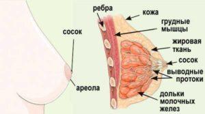 Жировая долька в молочной железе
