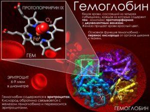 Гемоглобин и миома