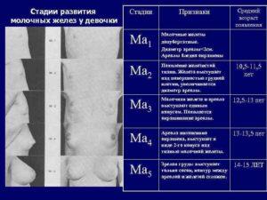 Развитие молочных желез