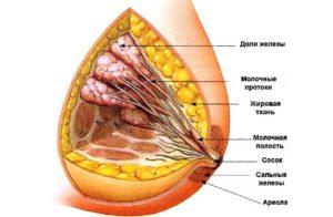 Протоки молочной железы