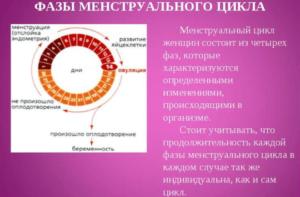 Менструальный цикл при климаксе