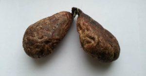 Струя бобра лечение кисты яичника
