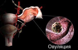 Тянет яичники после овуляции