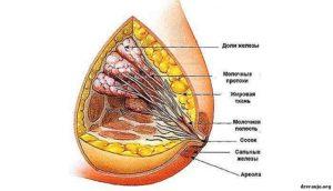 Жировая трансформация молочных желез что это такое