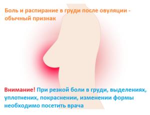 После овуляции болят молочные железы