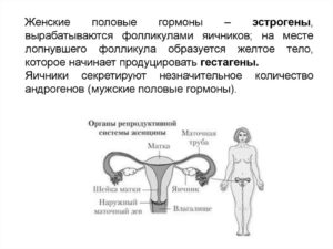 Как называются женские половые гормоны выделяемые фолликулярными клетками яичника