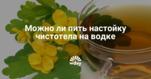 Настойка чистотела на водке рецепт и применение при миоме