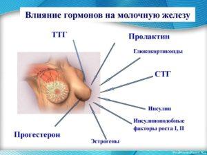 Женские гормоны для увеличения молочных желез