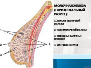 Воспаление дольки молочной железы