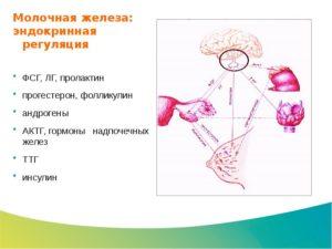 Гормоны молочной железы