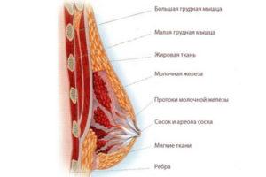 Почему набухают молочные железы в середине цикла