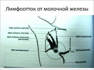 Отток лимфы от молочной железы