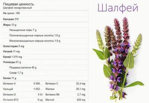 Шалфей лечебные свойства и противопоказания при климаксе