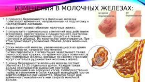 Изменения в молочных железах при беременности